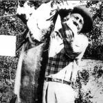 """Cal Johnson 24 juillet 1949 (Longueur 60 ¼"""" Tour de taille 33 ½"""" Poids 67lbs 8oz.)"""