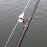 La glace se formait sur le fil et les anneaux de la canne.
