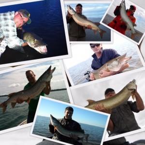 Quelques belles prises de la saison 2011.