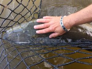 Un future poisson record!